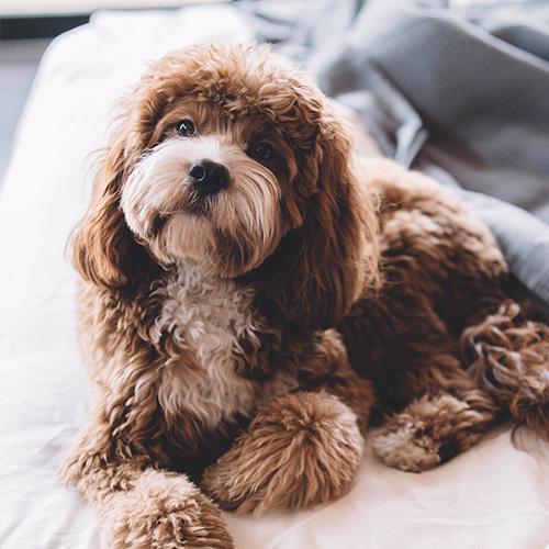 Foto de un perro