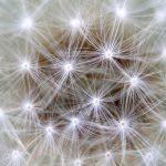 Neuronas Cerebrales interpretadas con forma de la flor diente de leon